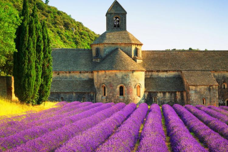 Lavender Fields Of Provence Stripes Europe